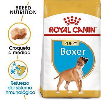 Royal Canin  Boxer Puppy Pienso para Cachorro de Raza  (Perros , Comida , Pienso)