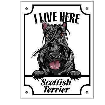 Tin plate Scottish Terrier Squinting dog sign