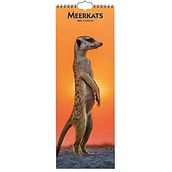 MEERKATS 2021 SLIMLINE BTUK by Browntrout