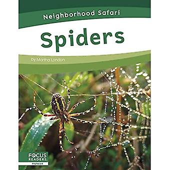 Neighborhood Safari: Spiders