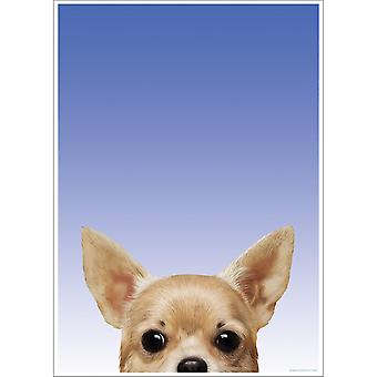 Inquisitive Creatures Chihuahua Poster