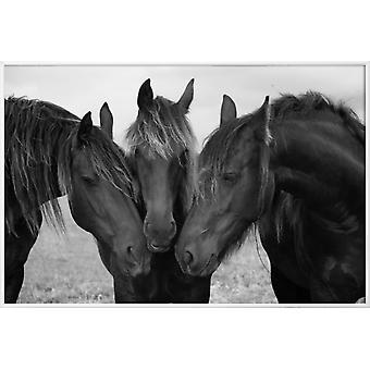 JUNIQE Print - Black and White Horses - Posters de chevaux en gris & noir