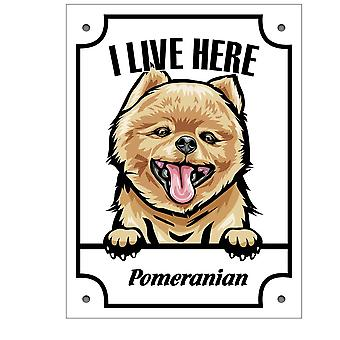 Pomeranian Peeking Dog metal Sign