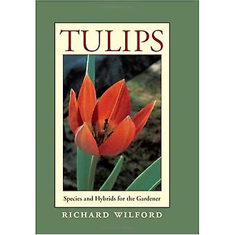 Tulips: Species and Hybrids for the Gardener