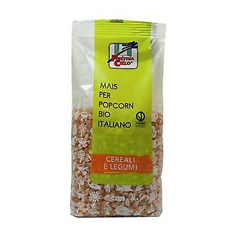 Corn for Italian popcorn None