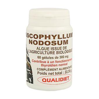 Seaweed ascophyllum nodosum 150 mg BIO 60 capsules of 505mg (300mg)