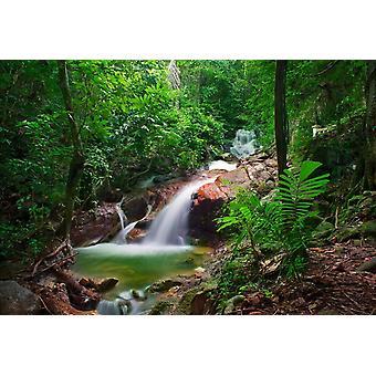 Mural de papel de parede Floresta Selvagem da Selva e Cachoeira