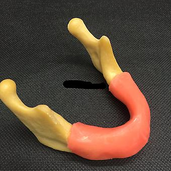 Mandible With Soft Tissue For Dental Implant Model Training Tool