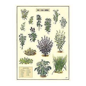 Cavallini Herbs Wrapping Paper / Poster High Quality / Decoupage