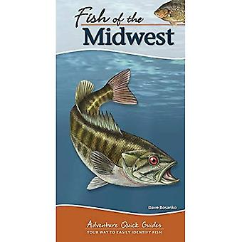 Fisch des mittleren Westens (Abenteuer Quick Guides)