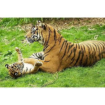Pintado Mural Tigre con Bebé