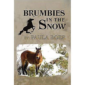 Brumbies in the Snow (Brumbies)
