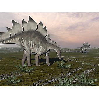Dinossauros de estegossauro pastando nas plantas Poster Print