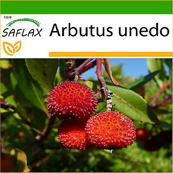 Saflax - 50 semi - con terreno - corbezzolo - Arbousier - Albatro - Árbol de las fresas - Erdbeerbaum