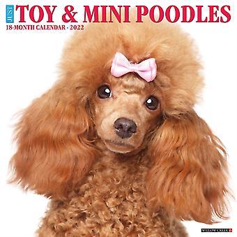 Bara toy miniatyrpudlar 2022 Wall Calendar Dog Breed av Willow Creek Press