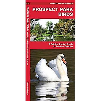 Prospect Park Birds: A Folding Pocket Guide to Familiar Species (A Pocket Naturalist Guide)