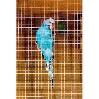 Nagykövet Cage & madárház hegesztett panel