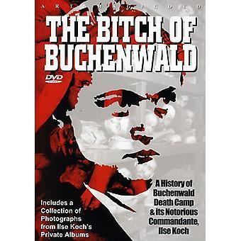 The Bitch of Buchenwald [DVD] USA import