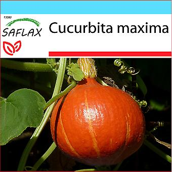 Saflax - Geschenk-Set - 10 Samen - Potiron - japanische Hokkaido - Kürbis - Hokkaïdo - Zucca di Hokkaido - Calabaza Hokkaido - Kürbis - Japan Hokkaido
