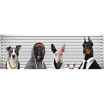 Most wanted dogs poster small format T rposter