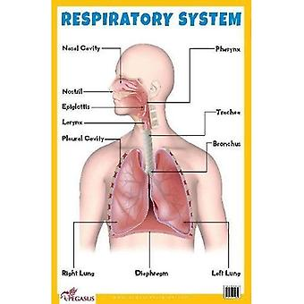 Gráfico educacional do sistema respiratório