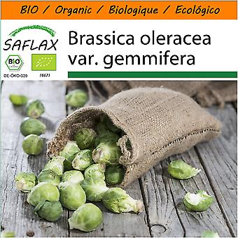 Saflax - Garden in the Bag - 30 seeds - Organic - Brussels Sprout - Groninger - BIO - Chou de Bruxelles - Groninger - BIO - Cavoletti di Bruxelles - Groninger - Ecológico - Coles de Bruselas - Groninger - Rosenkohl - Groninger