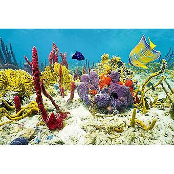 Wallpaper Mural Colors of Underwater Mar