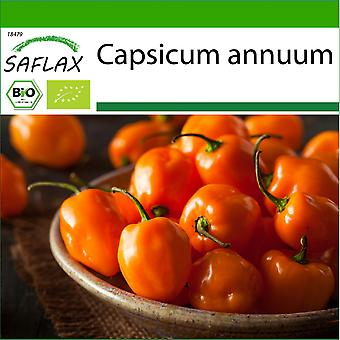 Saflax - 20 seeds - With soil - Organic - Hot Chili Pepper – Habanero Orange - BIO - Piment - Habanero orange - BIO - Peperoncino - Habanero Orang - Ecológico - Chile - Orégano Habanero - BIO - Chili - Habanero Orange