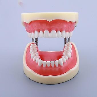 32 verwijderbare tanden model tandheelkundige tanden typodont model voor tandheelkundige mondelinge onderwijs