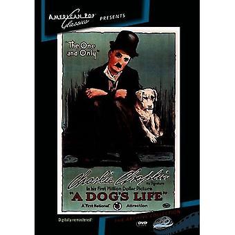Importer des USA de la vie de chien [DVD]