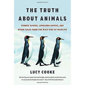 La vérité sur les animaux: Sloths lapidé, Hippos Lovelorn, et d'autres contes du côté sauvage de la faune