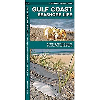 Gulfcoast Seashore Life: An Introduction to Familiar Plants and Animals