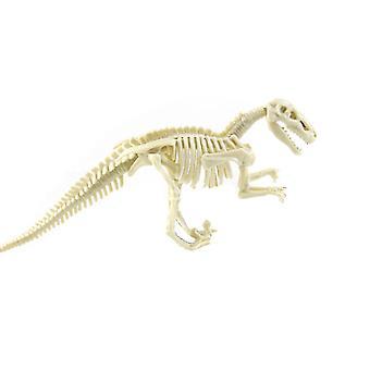 مجموعات حفر الديناصورات مع عظام الديناصورات والأسنان ، وما إلى ذلك علم الآثار علم الحفريات العلوم التعليمية