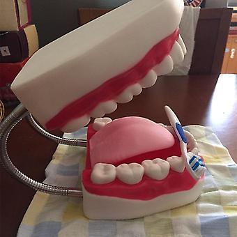 Sechsfache Vergrößerung Full Mouth Model Tooth, Teaching Dental, The High-Grade