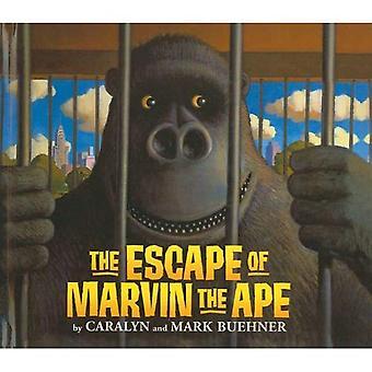 L'évasion de Marvin le singe
