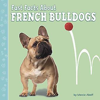 Nopeat faktat Ranskan Bulldogeista (Nopeat faktat koirista)