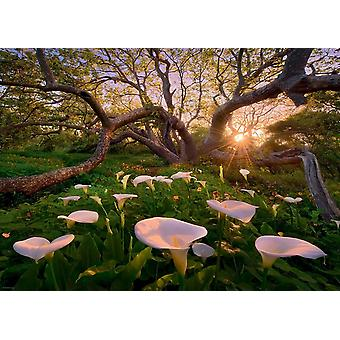 Heye Calla Clearing Jigsaw Puzzle (1000 Pieces)