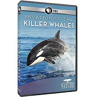 自然: シャチ 【 DVD 】 米国の侵入をインポートします。