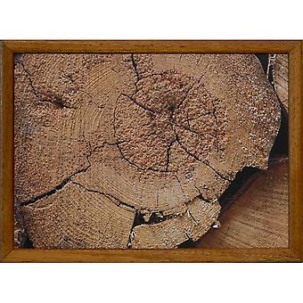 Sección transversal del tronco del cojín de vuelta