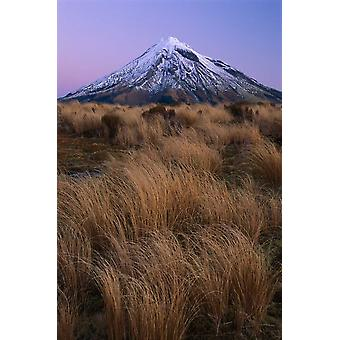 Mount Taranaki at dusk Mount Egmont National Park New Zealand Poster Print by Shaun Barnett