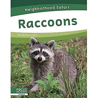 Neighborhood Safari: Raccoons