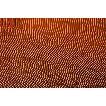 Sand dune patterns Namibia Poster Print by David Wall
