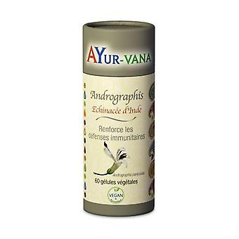 Andrographis 60 vegetable capsules