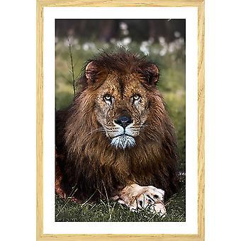 Poster dieren leeuwenpoten