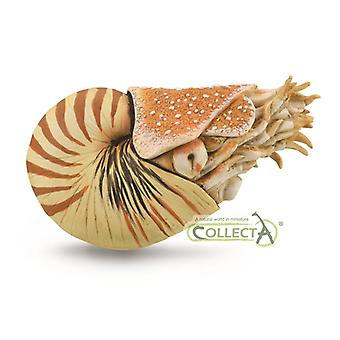 CollectA Nautilus Pompilius | Collectable Animal Figurine Roleplay Toy