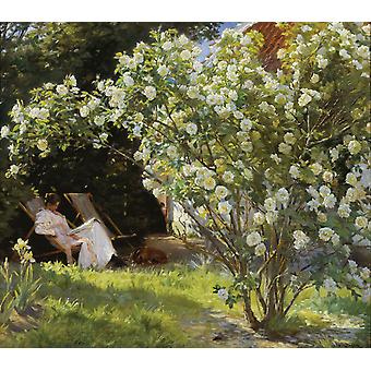 Rose Garden, Peder Severin Kroyer, 50x44cm