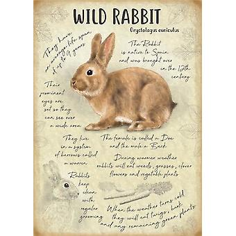 Medium Wall Plaque 200mm x 150mm - Wild Rabbit by The Original Metal Sign Co