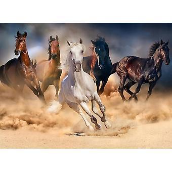 Tapet vægmaleri hest besætning i Gallop