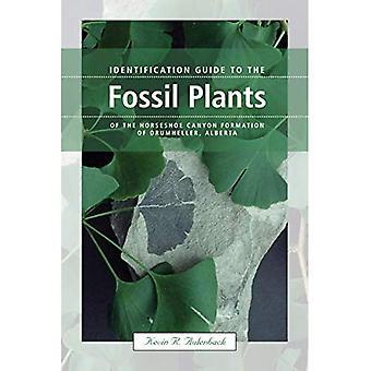 Identifierings guide till de fossila växterna i hästsko Canyon bildandet av Drumheller, Alberta