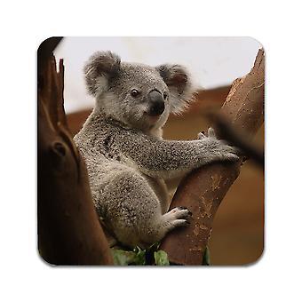 2 ST Koala Coasters
